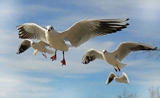seagull-659344_960_720.jpg